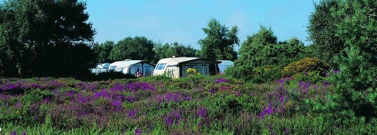 Holiday Park Norfolk - Kelling Heath - Caravan & Camping Site