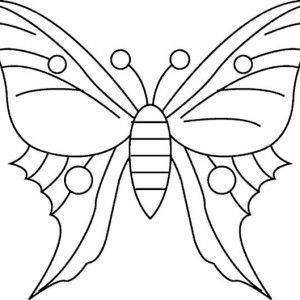 Butterfly, Simple Butterfly Drawing Coloring Page: Simple Butterfly Drawing Coloring Page