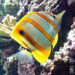 photos poissons(venant du net)