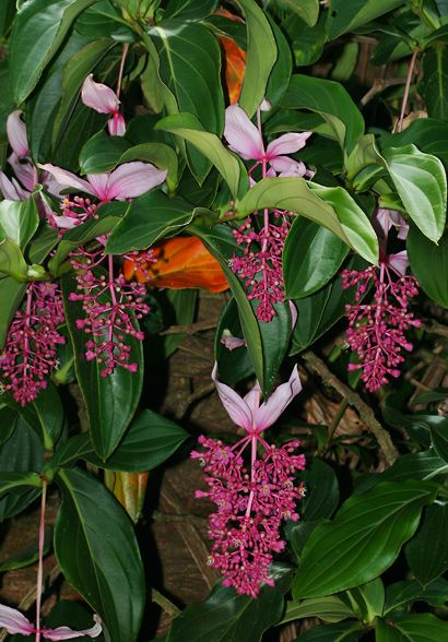 Find This Pin And More On Tropical Plants Flowers