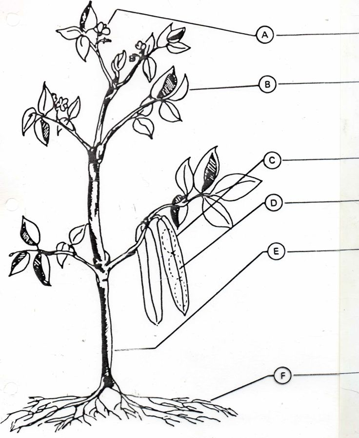 plant parts worksheets | 11. List the names of the internal parts of a leaf