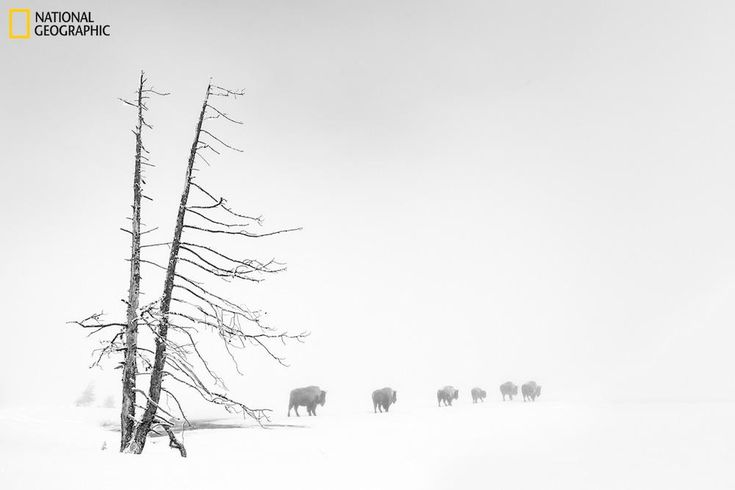 Best Nature Pictures Show the Majesty of our World – Fubiz Media