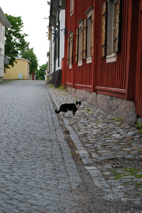 Kristinestad is known for its many cats. Here is one fellow outside the Lebell Merchant House museum.   (Photo: Kajsa Snickars)