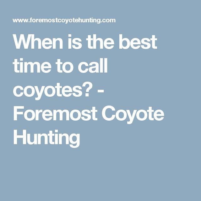 When is the best time to call coyotes? - Foremost Coyote Hunting