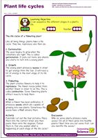 Outstanding Science Year 2 - Plants   Plant life cycles