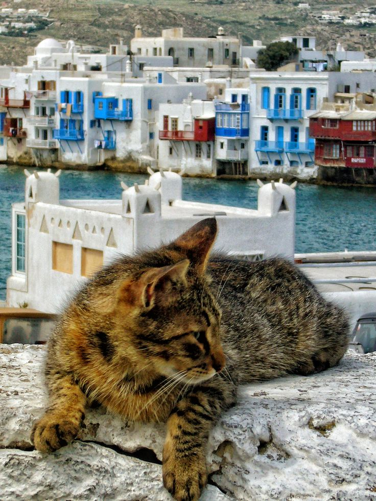 Cat's View of Mikri Venetia (Mykonos, Greece) - Mykonos is a Greek island, part of the Cyclades, lying between Tinos, Syros, Paros and Naxos. In Greek mythology Mykonos was the location of the battle between Zeus and the Titans, and the island was named in honor of Mykons, son of Anios who was a son of Apollo and nymph named Rio (Wikipedia).