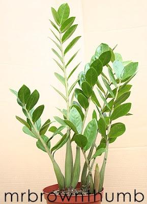 No Natural Light Plant For Kitchen. Indoor House PlantsIndoor ...