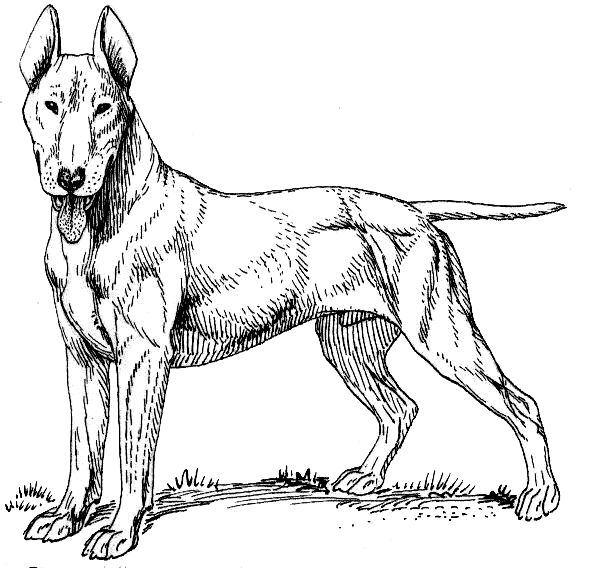 Dog Coloring Page Fun Coloring Pages For Kids And Adults