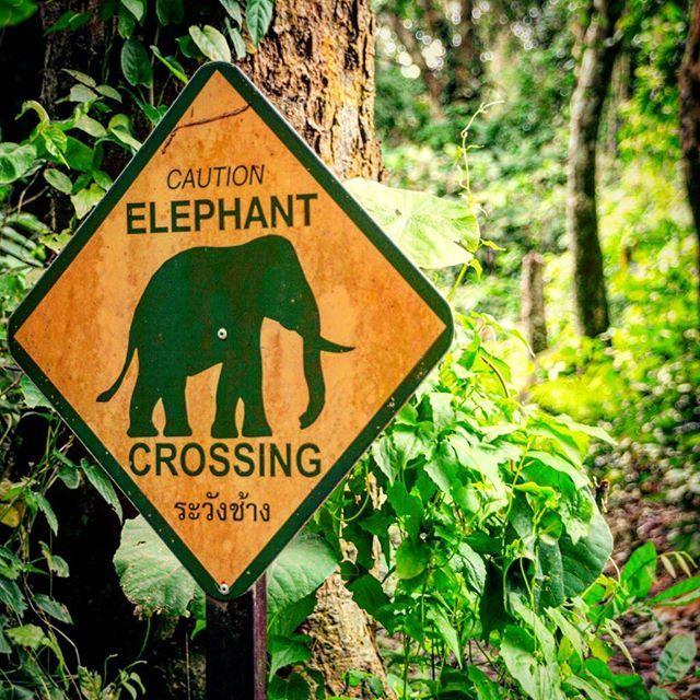 Les panneaux dans la jungle sont parfois quelque peu #insolite !  #mathailande #thailand #thai #thailande #elephant #forest