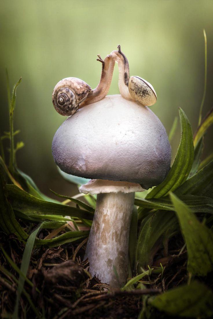 Wir lieben uns Pair of snails