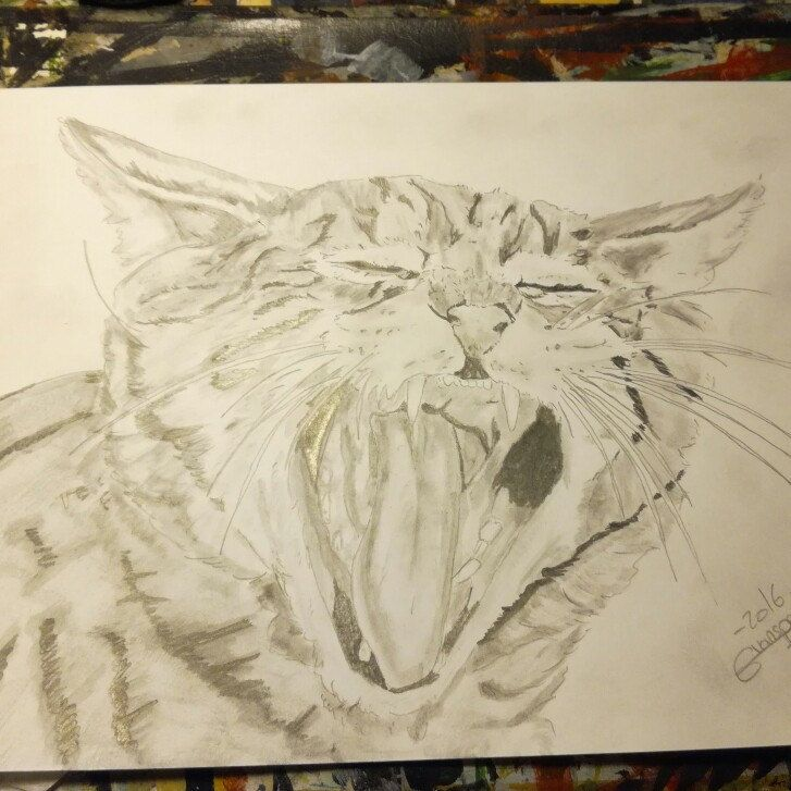 4th drawing new cat #art #artist #animal #fineart  #chat #cat #pencil #drawing