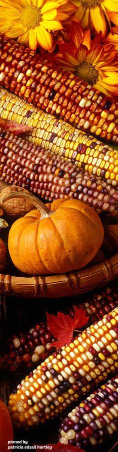 Indian corn and a pumpkin gourd