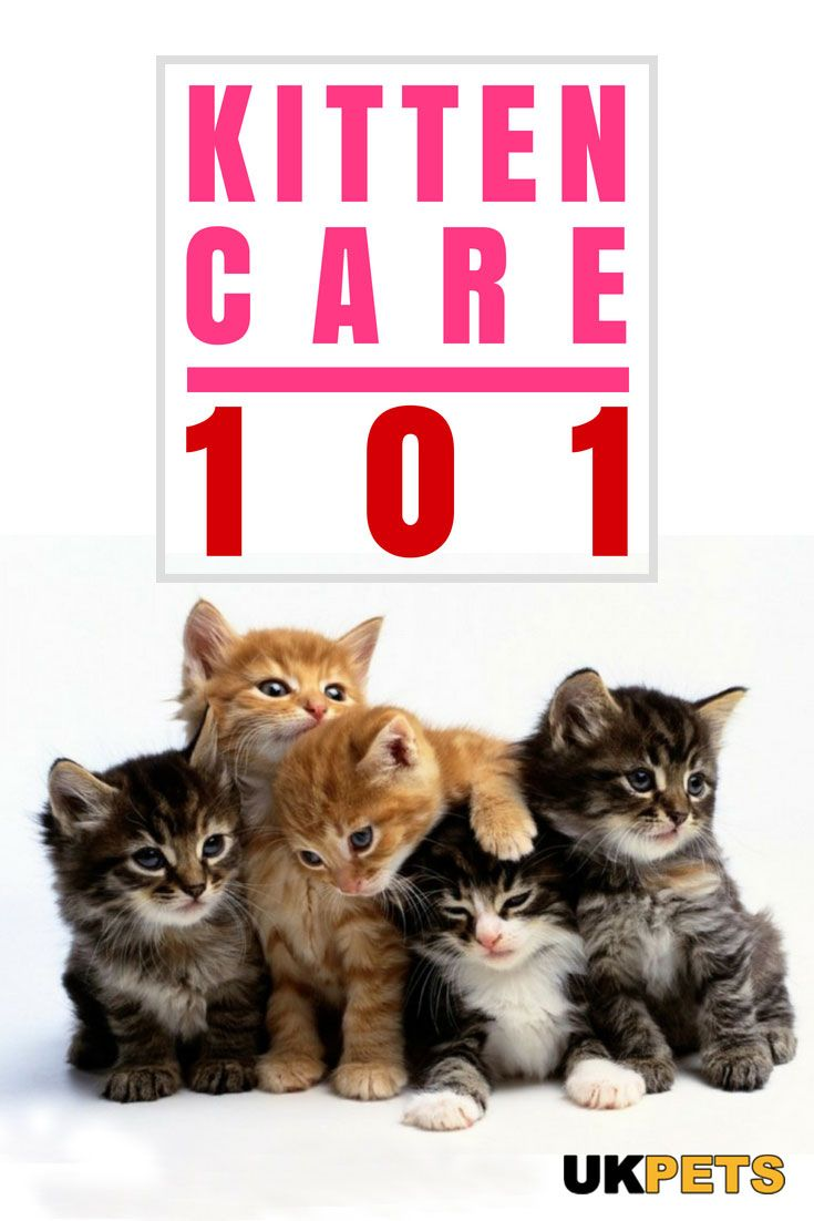 How To Look After A Kitten When You Work Kitten Care Cat Care Kitten Health