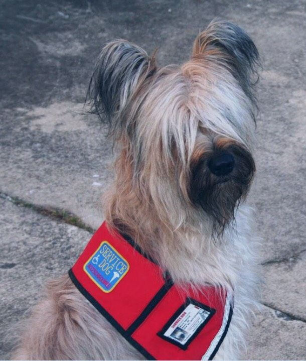 Ry-Con Service Dogs Shine Ray Of Hope On Families Dealing With Autism & Other Neurological Disabilities