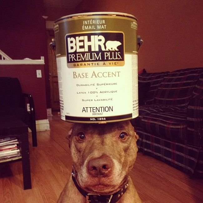 This Dog Can Stack Anything On His Head. You'll Die Laughing At What His Owner Has Tried...LOL | News-Hound
