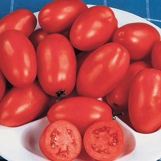 Tomato Roma Organic *HAVE