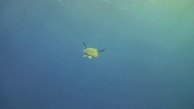 Conoce la biodiversidad marina de Rapa Nui por medio de este hermoso video de Oceana