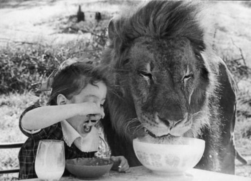 just having cereal with a lion