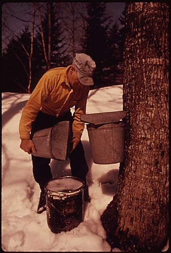 Vermont was admitted as a state On March 4, 1791. This is also close to the start of the traditional maple sugaring season. Shown here is a Vermont dairy farmer collecting sap to make maple syrup