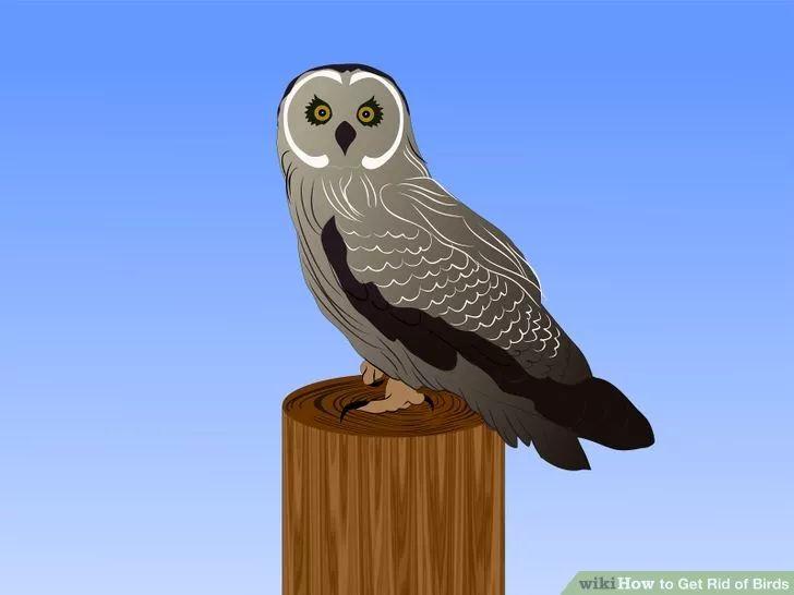Get Rid of Birds Birds, Keep birds away, Bird building nest