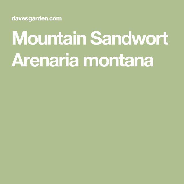 Mountain Sandwort  Arenaria montana