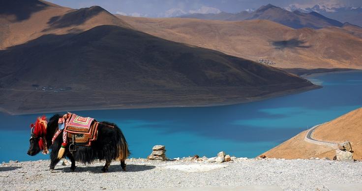 #Tibet e i suoi tappeti tibetani, dai colori sgargianti e dai mille usi..