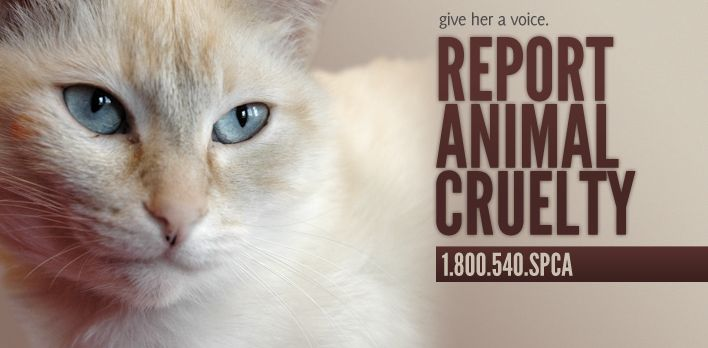 how to stop animal cruelty in the world