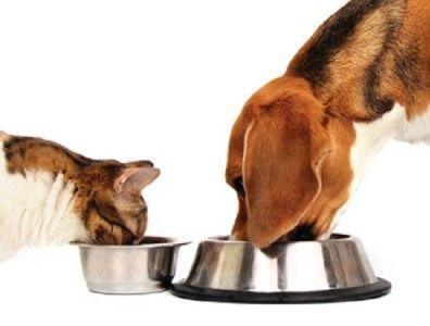 Quante volte vi è capitato di dover affidarvi a vicini, parenti e conoscenti nei momenti di necessità per dar da mangiare al vostro amico a quattro zampe? D'altronde la ciotola non si non si riempie da sola... o si ?! Da oggi esiste una pratica soluzione EASY SELF FOOD Easy Self Food è mangiatoia automatica per gatti, cani e piccoli animali, per la somministrazione di una dieta regolare anche in vostra assenza.