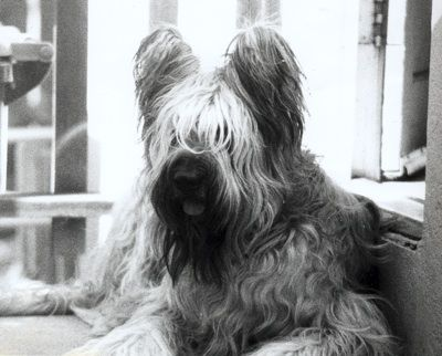 95 best my pins images on pinterest dog breeds doggies and briards i want everyone to have one in their home idk what i would do without friendly giants solutioingenieria Gallery