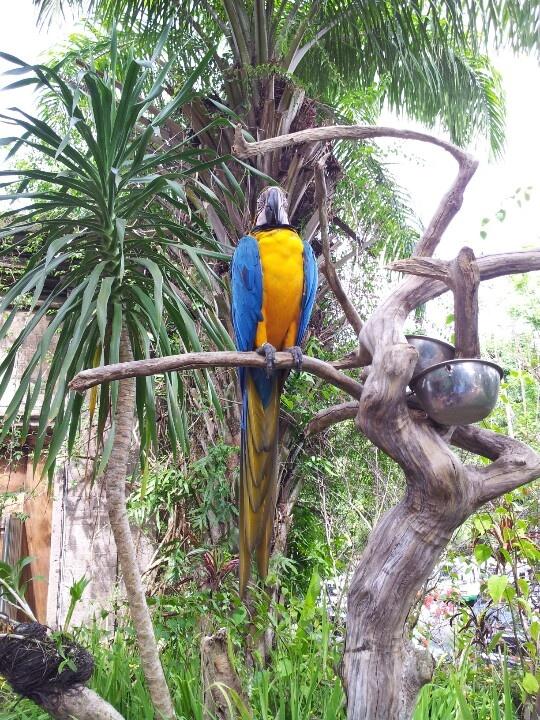 Macaw Birds,Bali Bird & Reptile Park