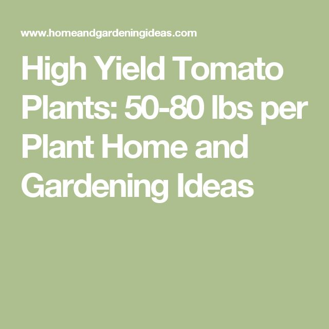 High Yield Tomato Plants: 50-80 lbs per Plant Home and Gardening Ideas