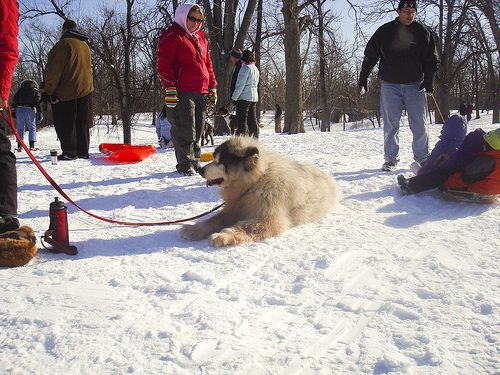Dog Friendly Parks In Buffalo Ny