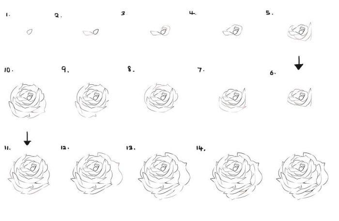 1001 Modeles Et Conseils Pour Apprendre Comment Dessiner Une Rose Comment Dessiner Une Rose Dessin Rose Croquis De Rose