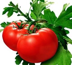 10 Interesting Facts about Nutritional Benefits of Tomatoes  Read More Click here - http://goo.gl/qe5xl3  #tomatoes #nutrition