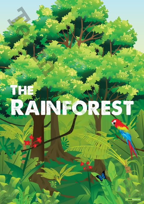 Teaching Resource: Over 25 pages of rainforest posters and worksheets for your science class.