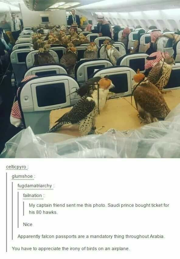Sequel to Snakes on a plane