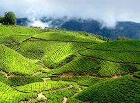 2 Nights Kerala Package