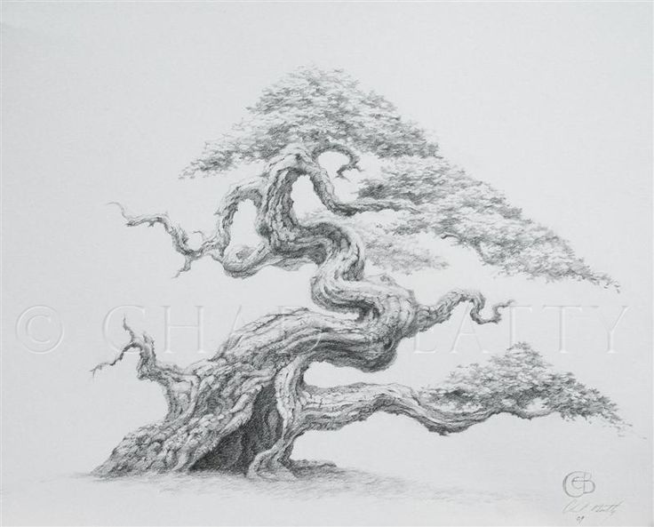 Pix For > Hollow Tree Drawing