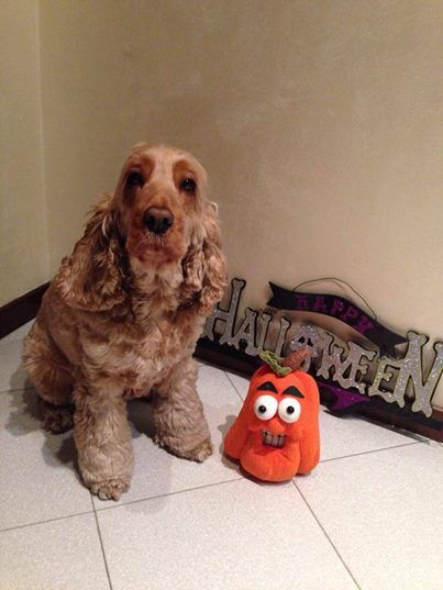 Petunia ha festeggiato Halloween con noi assieme alla sua mamma e al suo papà e sembra che si sia trovata molto bene! <3