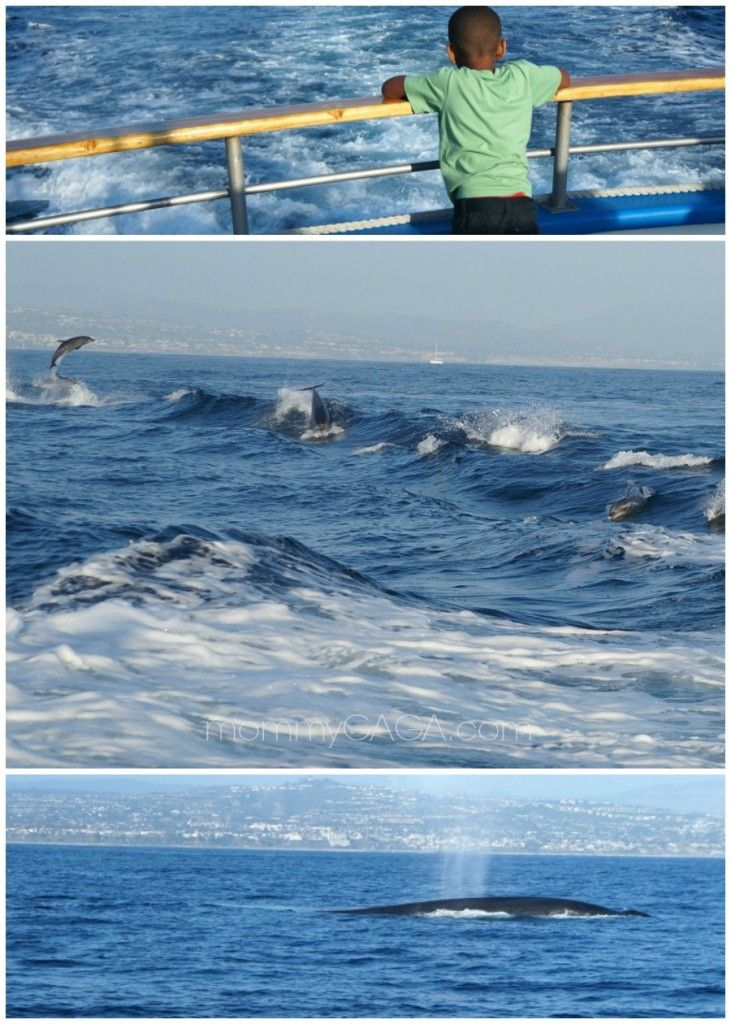 Family whale watching cruise with dana wharf sportfishing for Fishing dana point