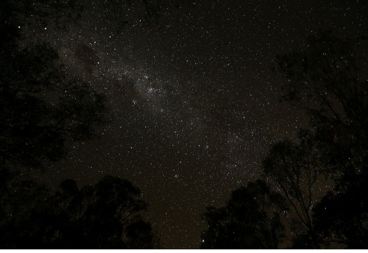 The Milky Way through the trees on the banks of the Darling River at Louth, New South Wales