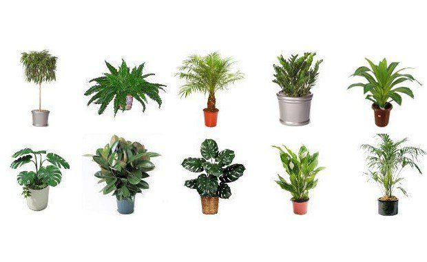 houseplants that filter toxins out of House plants can clear your room of toxins by  three bad-boy culprits that plants can filter out of your environment are  benzene seeps out of paints,.