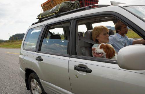 In-viaggio-con-il-cane-in-macchina  The accessories for car travel with your dog
