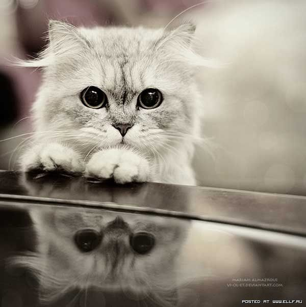The most beautiful cat photo