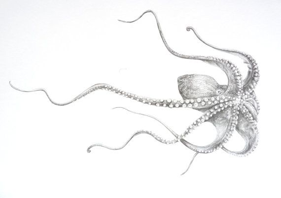 Octopus Drawing Original Graphite Art by CaughtByTheLight on Etsy, £50.00