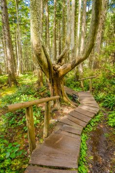 I need to go here... The Cape Flattery Trail, favorite destination for eco-tourists and hikers, is located on the tip of the Olympic Peninsula and is one of the most beautiful places on the Makah Indian Reservation. Just 2 hours away from the city of Port Angeles, Washington, Cape Flattery is well worth the drive. The 3/4 mile trail consists of boardwalk, stone and gravel steps.