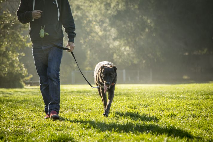 Consider your dog's size, breed, energy level and sensitivity to weather when deciding how much to walk your pet. Gina Cioli/I-5 Studio