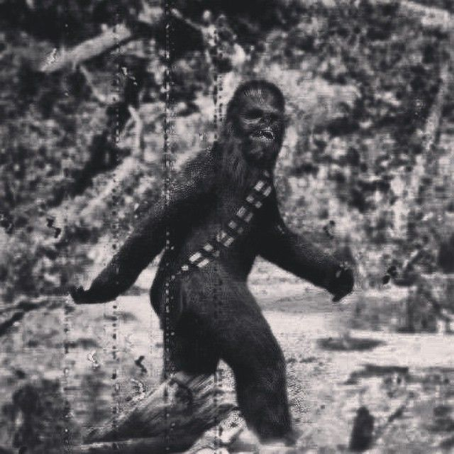 "#StarWars #Chewbacca #Bigfoot"" | Made me LOL | Pinterest ..."