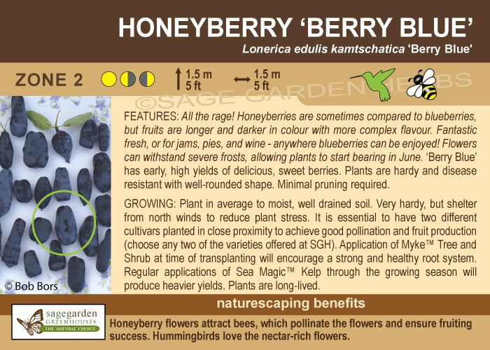 """Honeyberry """"Berry Blue"""" Haskap/Honeyberries zone 2 ..."""