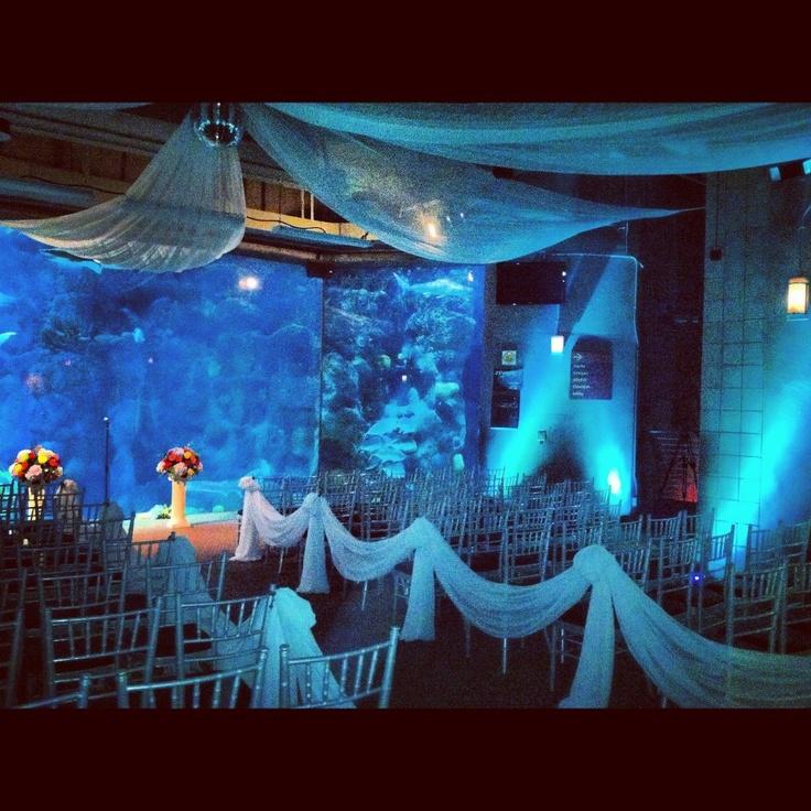Wedding Ideas Florida: Weddings By Eventions Drape At The Florida Aquarium